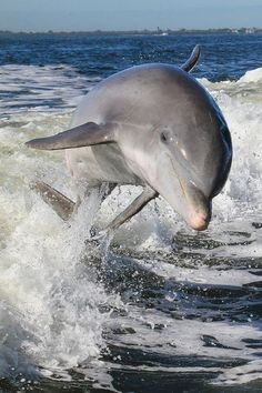 Add your name now to Dolphins, whales, seals, manatees and other marine mammals depend on you to speak up for them. Ocean Creatures, All Gods Creatures, Underwater Creatures, Orcas, Beautiful Creatures, Animals Beautiful, Beautiful Beautiful, Fauna Marina, Photo Animaliere