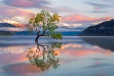 Lone Tree Of Lake Wanaka - New Zealand Photo: This Photo was uploaded by staffpicks. Find other Lone Tree Of Lake Wanaka - New Zealand pictures and phot. Cool Pictures, Cool Photos, Beautiful Pictures, Amazing Photos, Funny Pictures, Park Pictures, Epic Photos, All Nature, Amazing Nature