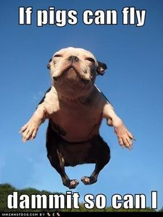 Pigs not the only thing that can fly.