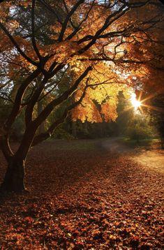 Beautiful Places, Beautiful Pictures, Beautiful Scenery, Simply Beautiful, Sunday Photos, All Nature, Amazing Nature, Fall Pictures, November Pictures
