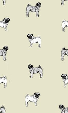 1000 Images About Pugs On Pinterest