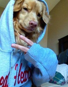 Paws to take a selfie