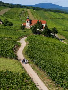 Dambach Vineyard Road is along the Alsace Wine Route, celebrating 60 years in 2013.