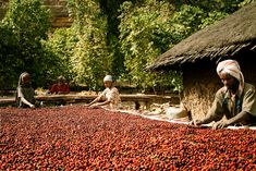 Blessed Coffee: As much as I drink coffee I should go visit a coffee farm