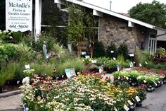 McArdles Florist & Garden Center   48 Arch St.,   Greenwich, CT 06830  Tel. (203) 661 5600