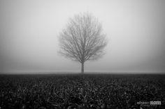 Tree in the fog by NorbertKocsis on DeviantArt