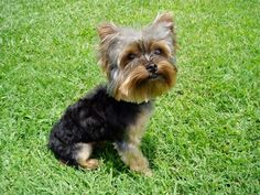 Oakley needs this haircut!