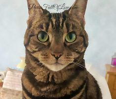 Caturday Art Photo Editor Free, Animal Rights, Big Eyes, Animal Paintings, Art Blog, Animal Pictures, Photo Editing, Pets, Drawings