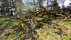 Lenholmenin luonnonsuojelualue Paraisilla