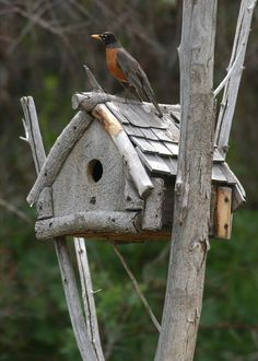 Bird House Kits Make Great Bird Houses Bird House Feeder, Bird Feeders, Birdhouse Designs, Unique Birdhouses, Birdhouse Ideas, Bird House Kits, Bird Aviary, Kinds Of Birds, Bird Cages