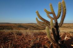 Cid Barbosa3 Stop Motion, Cactus Plants, Nature, Photography, Outdoor, Artists, Tattoo, Summer, Tropical Rain Forest