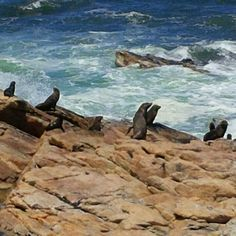 Seals kleinzee northern cape best travel destination