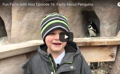 FFWA Episode 16:  Facts About Penguins   http://www.funfactswithalex.com/episode-16-facts-about-penguins/
