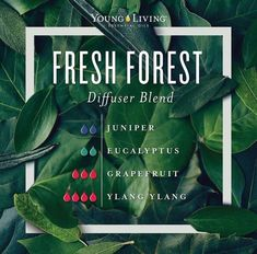 Young Living Training and Education Juniper Essential Oil, Are Essential Oils Safe, Essential Oil Scents, Essential Oil Diffuser Blends, Essential Oil Uses, Young Living Essential Oils, Hyssop Essential Oil, Citronella Essential Oil, Doterra Diffuser