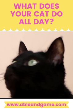 What does your cat do all day? We had a good hard look at all the things our cat loves to do, starting with sleeping. Not in the fancy cat bed though, that is for walking past. Fancy Cats, Black Cats, Cat Lovers, Walking, Sleep, Bed, Animals, Inspiration, Animales
