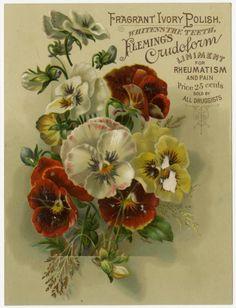 (Patent Medicine Trade Card, c.1900) Vintage Ephemera, Vintage Cards, Vintage Paper, Vintage Images, Garden Catalogs, Seed Catalogs, Ephemeral Art, Vintage Seed Packets, Vintage Medical