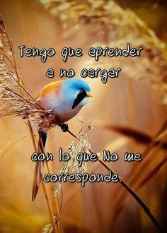 Spiritual Messages, Positive Messages, Spiritual Quotes, Spanish Phrases, Spanish Quotes, Motivational Phrases, Inspirational Quotes, Famous Quotes, Me Quotes