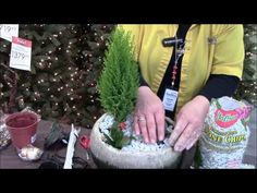 Learn how to make a Christmas Fairy Garden with our expert in The Christmas Shop at Stauffers of Kissel Hill. www.skh.com