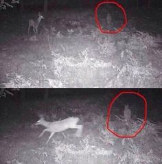 I love how that deer is like, nope, creepy kid wandering in the woods, I'm out! Creepy Stories, Ghost Stories, Gif Terror, Ghost Hauntings, Paranormal Photos, Ghost And Ghouls, Real Ghosts, Creepy Pictures, Bizarre