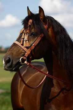 Zingaro is a light brown Spanish repujada vaquera bridle with leather mosquero, to complete your Spanish look. Horse Bridle, Horse Gear, Headstalls For Horses, Horse Costumes, All The Pretty Horses, Saddle Pads, Horse Pictures, Saddles, Zebras