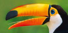 Der gewaltige Schnabel des Riesentukans macht zwar ein Drittel seiner Körpergröße von 60 Zentimetern aus, wiegt aber wegen seiner Leichtbauweise weniger als Kork. Mittels dieses Fressorgans vermag der Spechtvogel große Früchte zu pflücken, auszupressen und den Saft zu trinken. – Diese Karte hier online kaufen: http://bkurl.de/pkshop-211373 Art.-Nr.: 211373 Schnabelsaftpresse | Foto: © MIN/Rex Features/action press | Text: Rolf Bökemeier