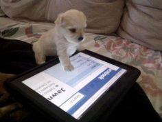 Tech savvy pup