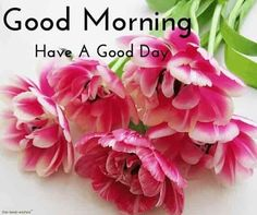 Looking for for inspiration for good morning motivation?Check out the post right here for perfect good morning motivation ideas. These entertaining pictures will brighten your day. Good Morning Couple, Good Morning Beautiful Flowers, Good Morning Beautiful Images, Good Morning Roses, Good Morning Msg, Good Morning Images Hd, Good Morning Picture, Morning Pictures, Morning Wish