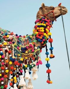☾ ☾ ☾ ▲ ☽ ☽ ☽    Everyone and everything in India dresses in brights, including the main attraction at the annual Pushkar Camel Fair.