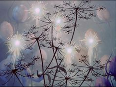 Winter is here in The Nutcracker Suite by Pyotr Ilyich Tchaikovsky in Fantasia 1940