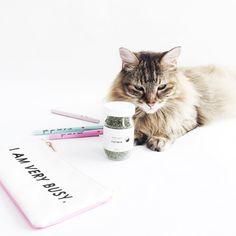 "Tabby James on Instagram: ""Classic cat snob #IAmVeryBusy """