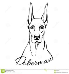Doberman Dog Head - Download From Over 64 Million High Quality Stock Photos, Images, Vectors. Sign up for FREE today. Image: 70945636