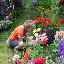Garden Fair 2013 | Klehm Arboretum & Botanic Garden