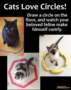 16 Money-Saving Life Hacks You Can Do With Everyday Products Cute Kittens, Cats And Kittens, Funny Cats, Funny Animals, Cute Animals, I Love Cats, Crazy Cats, Cat Hacks, Kitten Care