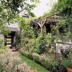 pergola en bois rustique et plantes grimpantes autour de la terrasse