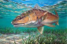 Redfish Hunt