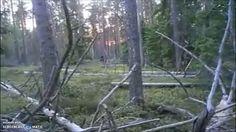 Huge Bigfoot Sprints Away From People - Original Video