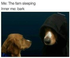 Dogs are super funny and hilarious! They make us laugh all the time! Just look how all these dogs and puppies play, sleep, get along with cats, babies, how they Dog Memes, Dankest Memes, Funny Memes, Hilarious, Funny Animal Pictures, Funny Photos, Funny Animals, Animal Funnies, Animal Pics