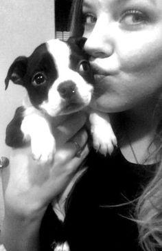 Boston Terrier Puppy Dottie