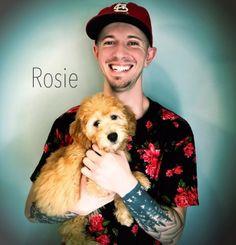 Rosie Smeraglia Parents Rosetta/MaxGender Female #Smeraglia  #teddybeargoldendoodle  #goldendoodles  #EnglishGoldendoodles  #Puppies