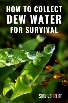 In a crisis where you have no access to rainwater or any open body of water, knowing how to collect dew water from the surroundings can spell the difference between survival and dehydration. Every survivalist should know how to gather dew. #dewwater #watersources #waterforsurvival #survival #survivallife