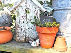 think I'll put some herbs in pots this year!.