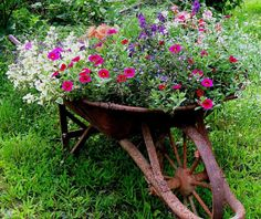 Pretty flowers .