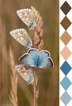 blue moth (color id: Pantone, by leaff)