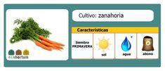 Rica en nutrientes: la zanahoria. Fácil de cultivar en tu huerto en casa: http://ecohortum.com/como-cultivar-zanahorias/