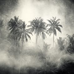 Coconut, photography by Hengki Koentjoro