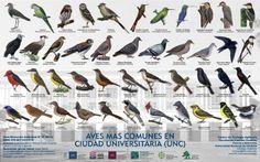 Aves de la ciudad universitaria de Córdoba