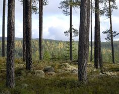Landscapes : Haakon Harriss Photography Landscapes, Plants, Photography, Paisajes, Scenery, Photograph, Fotografie, Photoshoot, Plant