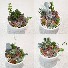 Succulents Garden, Terrarium, Babies, Plants, Instagram, Decor, Terrariums, Babys, Decoration