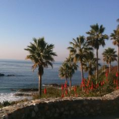 View from Las Brisas Restaurant in Laguna Beach. The food is as wonderful as the view! Dana Point, California Dreamin', Laguna Beach, Places To See, Restaurants, Spaces, Water, Outdoor, Food