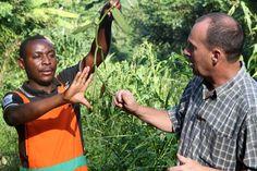 Vanille aus dem Kongo: Die Königin der Gewürze